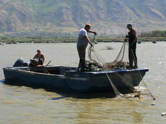 Carp-nets-boat